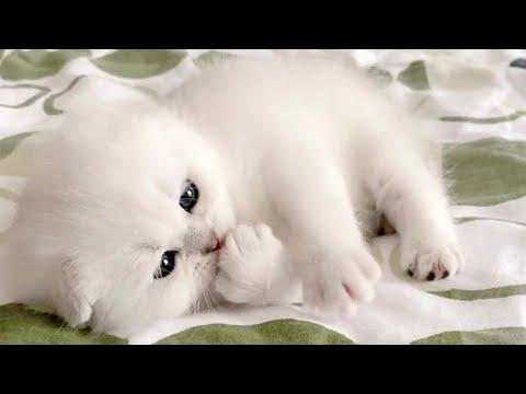 Baby Snow Kittens Video