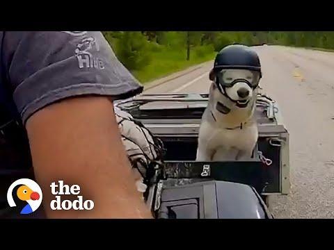 Motorcycle-Loving Senior Husky Get His Own Sidecar #Video