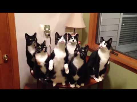 NINJA CATS in ACTION VIDEO!