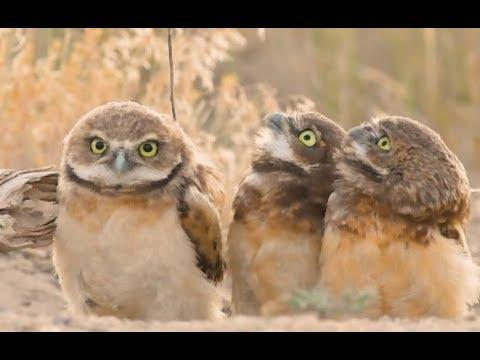 Owl With A Really Big Stick - Your Daily Dose Of Internet