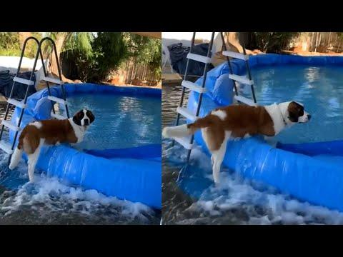 Dog Destroys Owner's Pool And Floods Entire Backyard #Video