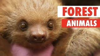Majestic Animals Video Compilation