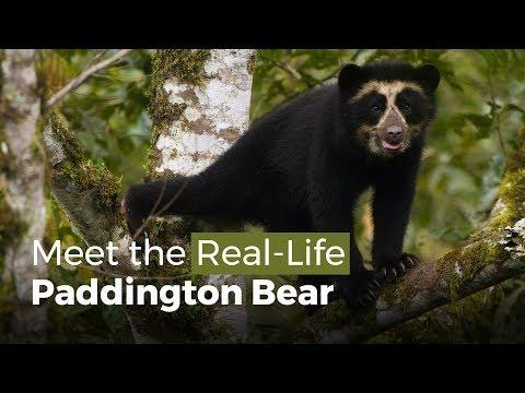 Meet the Real-Life Paddington Bear