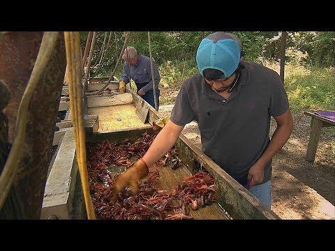 Texas Crawfish Farm (Texas Country Reporter)