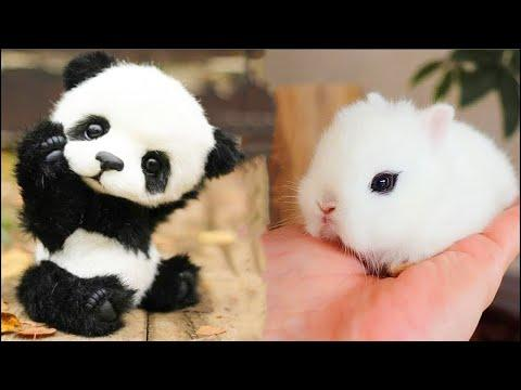 Cutest baby animals Videos Compilation Cute moment of the Animals - Cutest Animals #33