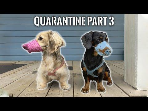 Ep#3: Quarantine Part 3 Video - WE'RE FREE! (Well, almost...)