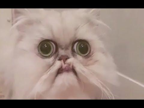 The Ugliest Cat - Your Daily Dose Of Internet