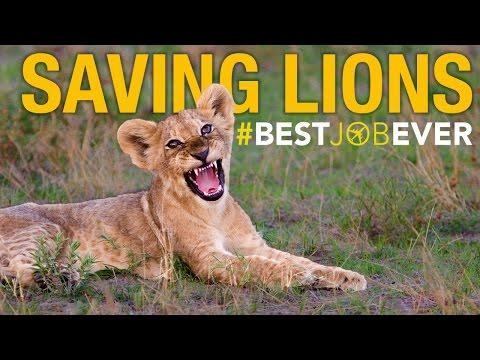 Lion Rapid Response Team: #bestjobever