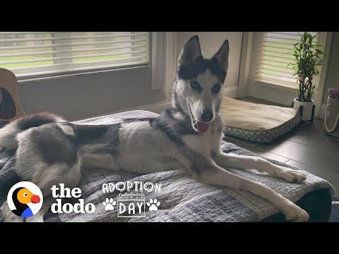 You Won't Believe What This Husky Looks Like Now Video