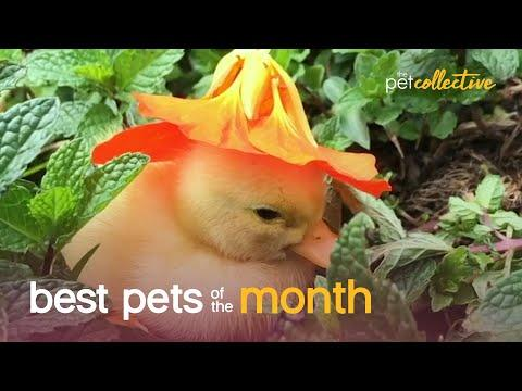 Best Pets of the Month - October 2020 Video | The Pet Collective