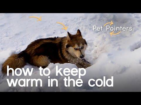 Keeping Your Pet Warm In The Cold | Pet Pointers