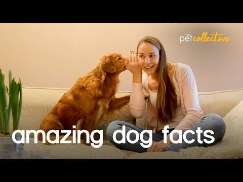 Amazing Pet Facts: DOGS VIDEO