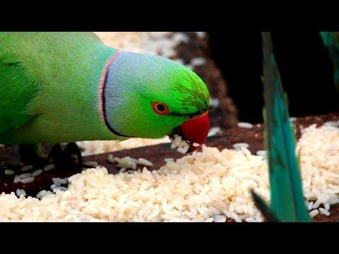 The Birdman of Chennai | Earth From Space: Web Exclusives | Earth Unplugged