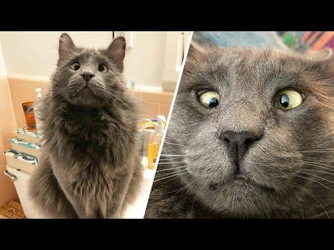 Woman wins lottery to take this cross-eyed shelter cat home #Video