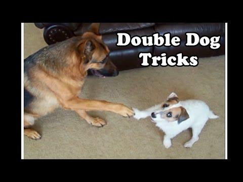 Double Dog Tricks By Jesse And Kaine