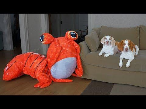 Dogs vs Giant Shrimp Prank! Funny Dogs Maymo & Potpie