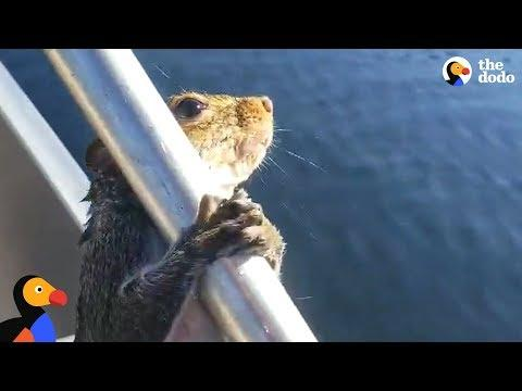 Guy Helps Squirrel Trying To Swim In Lake