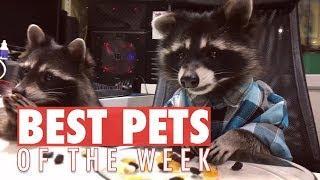 Best Pets of the Week   September 2017 Week 4