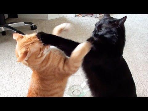 EPIC Cat Fight ! ( Not Really )