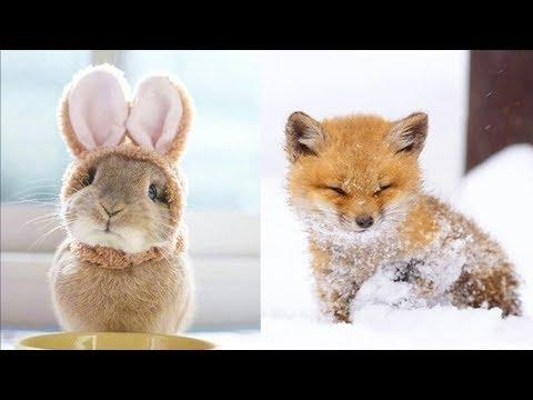 Cutest Baby Animals Videos Compilation Cute Moment of the Animals