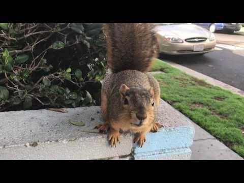 squirrel encounter of the friendly kind video