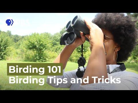 Tips and Tricks for Birding Beginners Video | Birding 101 with Sheridan Alford