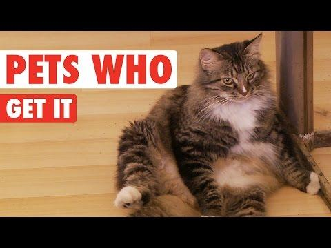 Pets Who Get It    Funny Animal Compilation