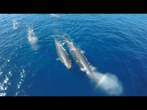 Rare Sperm Whale Sighting In 4K