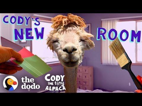 Tiny Alpaca Gets Her Own Bedroom | Cody The Tiny Alpaca (Episode 5)