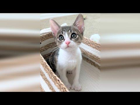 Precious Tiny Kitten With Big Feet Will Melt Your Heart #Video
