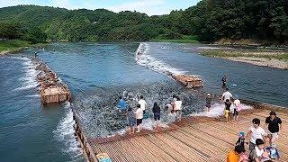 THIS IS A SMART JAPANESE RIVER FISHING METHOD USING BAMBOO TRAPS