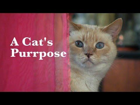A Cat's Purrpose Is To....