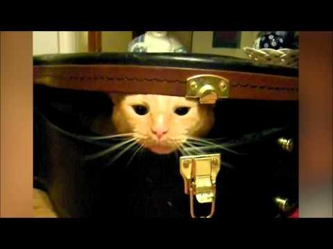 Cat Traps Brother In A Guitar Case