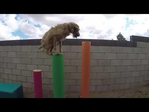 A Parkour Dog Named Lucy