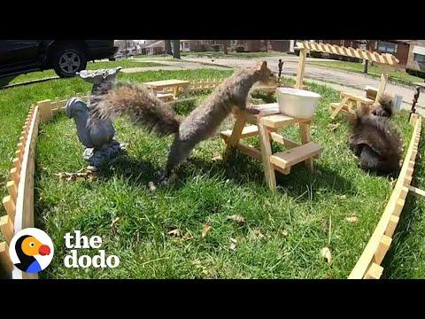 Guy Builds Tiny Restaurant for Neighborhood Wildlife Video...See What Happens Next