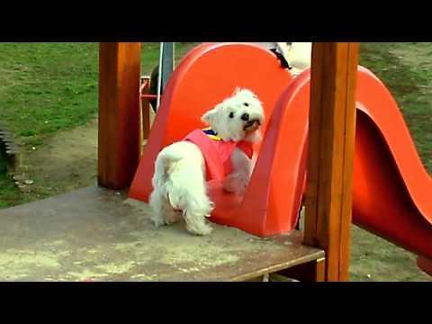 Funny Dog... Panni The Slider Hero