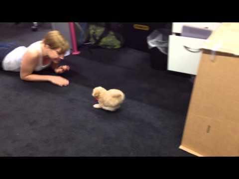 The Incredible Dog Shrinking Machine