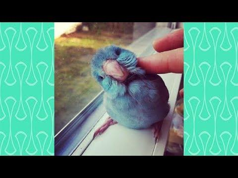Hardest TRY NOT TO AWW with Cute Parrots  - Cutest  Parrots In the World 2018