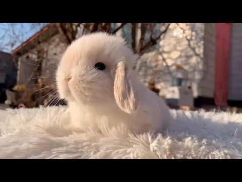 Pawsitive Baby Bunnies To Make Your Day #Video