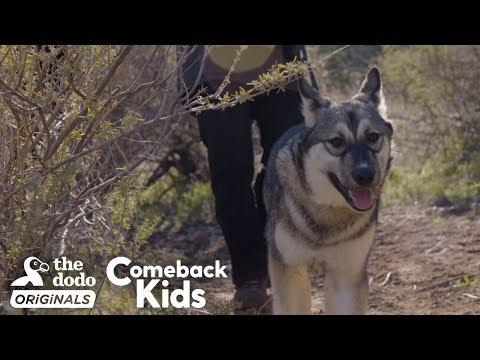 Baby Wolf Dog Bounces Back After Rough Start