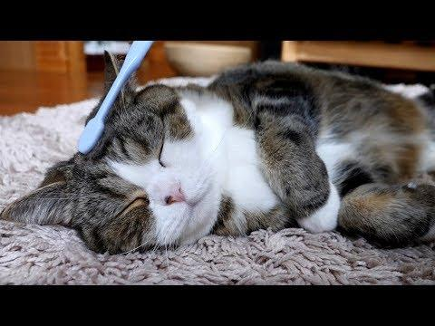 Maru&Hana are healed by a toothbrush