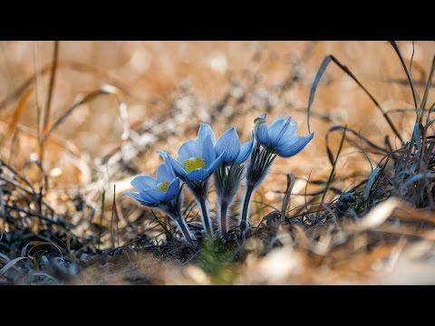 Photos: Watch Spring Bloom Before Your Eyes