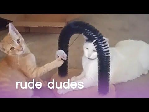 Rude Dudes: Pushy Pups, Clingy Cats &  Dogs