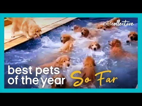 Best Pets Of The Year...So Far: PART II (2020)