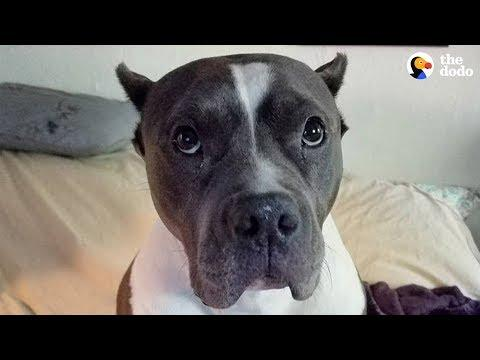 Rescue Pittie Talks To Her Mom Nonstop