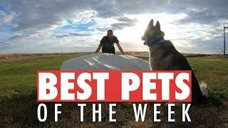 Best Pets of the Week | July 2018 Week 2