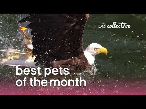 Best Pets of the Month (August 2019)