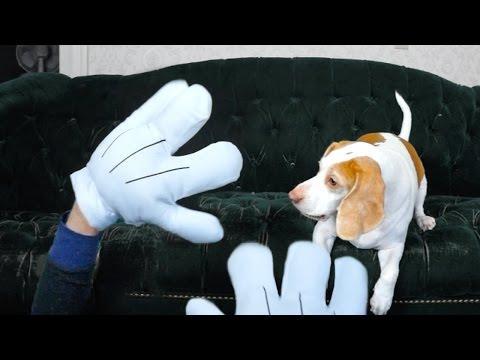 Dog Vs. Giant Cartoon Hands: Cute Dog Maymo