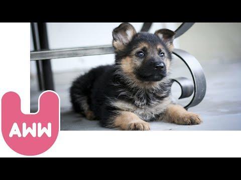 5 Really Cute Animals