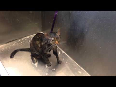 Downhearted Cat Says NO MORE During Her Bath!